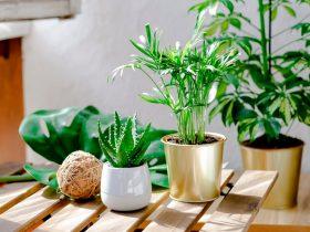 plantes intérieur exterieur