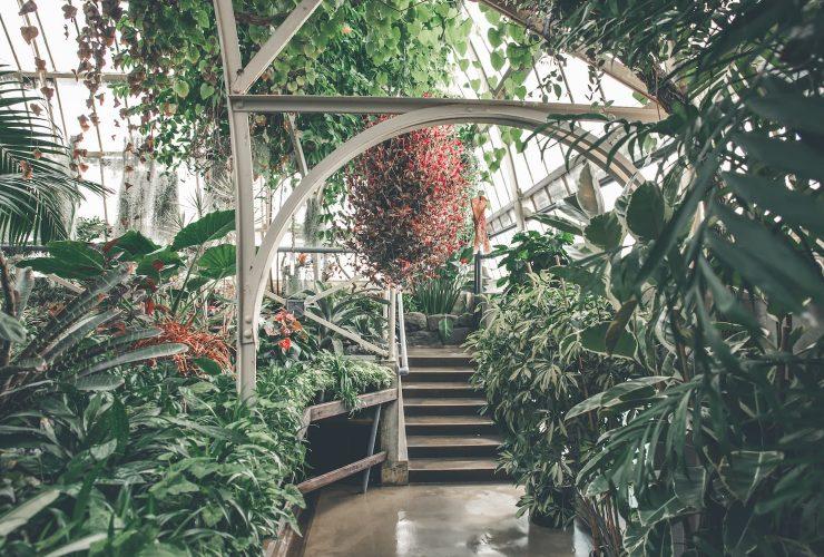 plantes exotiques intérieur