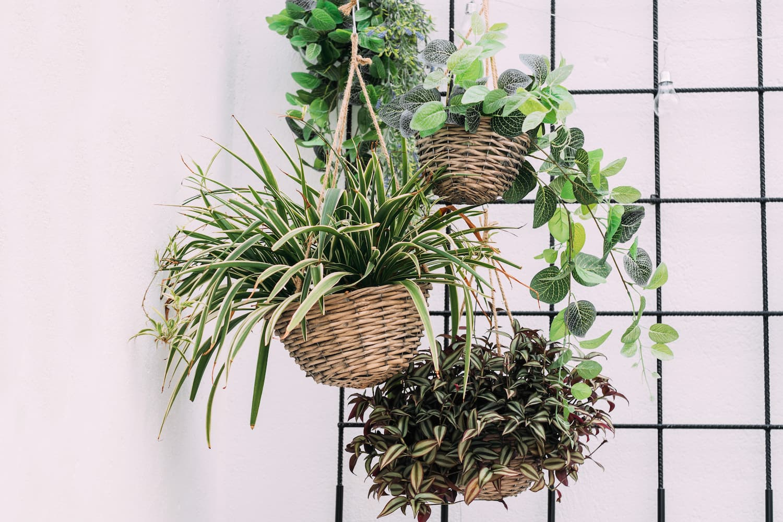 plantes tombantes